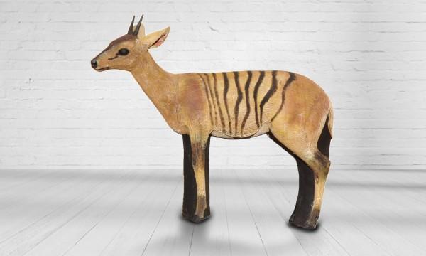 Asen Zebra Duiker