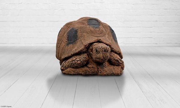 Asen Schildkröte